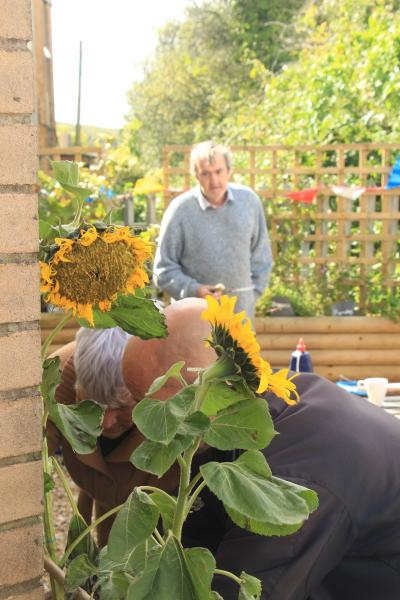 Two men work in a garden where there are sunflowers growing.
