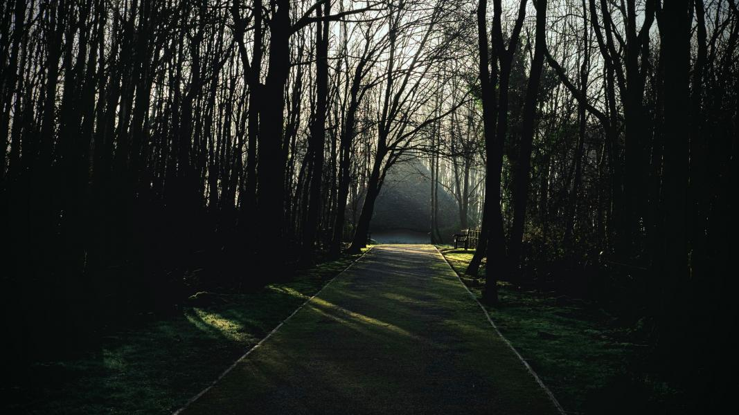Moody morning. This is the path leading up to Bryn Eryr Iron Age Roundhouses at St Fagans in Cardiff, Wales, UK.